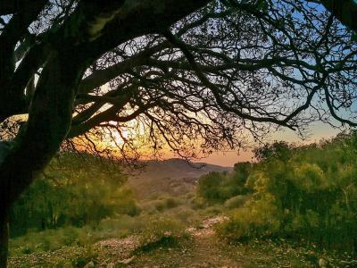 נוף מקסים בלב חורש טבעי