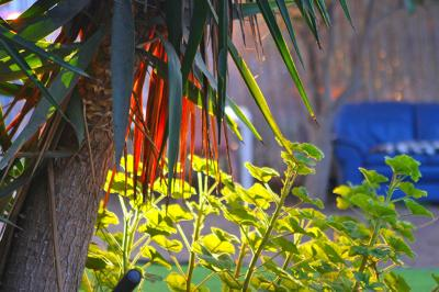עצי נוי ופרחים בחצר המתחם